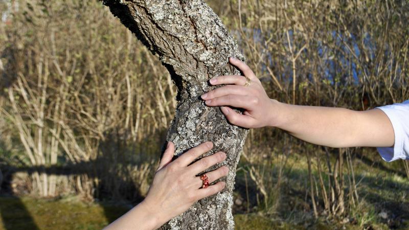 två kvinnohänder håller om en trädstam