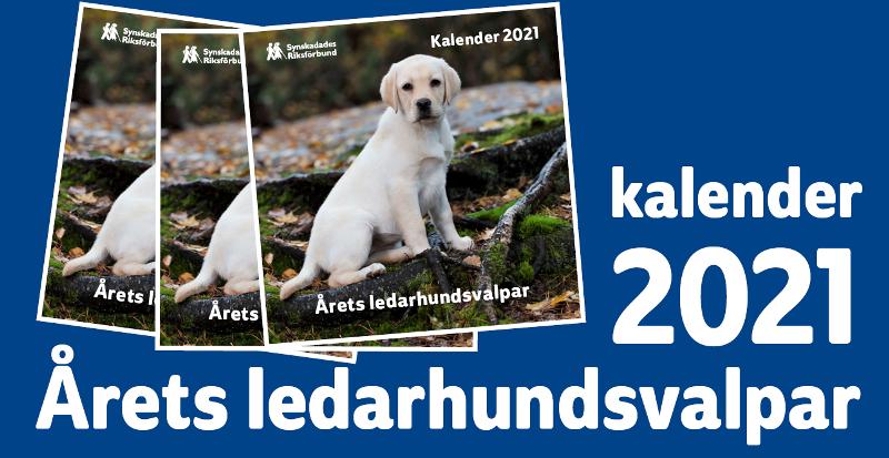 Bild på ledarhundskalendern med en ljusgul labradorvalp som sitter i skogsmiljö och tittar in i kameran.